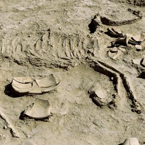 Horse-Skeleton-Gonur-Depe
