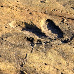 dinosaur footprints quthing 2